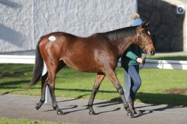 Lot 110, B.F. Beat Hollow ex Quevega