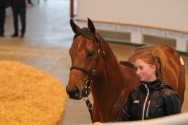 Lot  212 T G B3167 Tattersalls