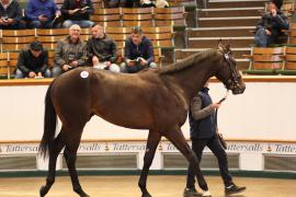 Lot  263 T G B3239 Tattersalls