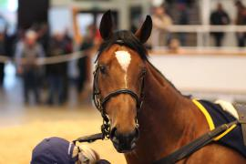Lot  275 T G B333 Tattersalls