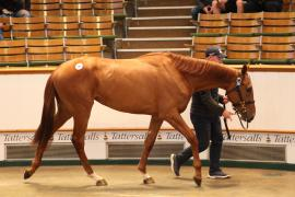 Lot  281 T G B3416 Tattersalls