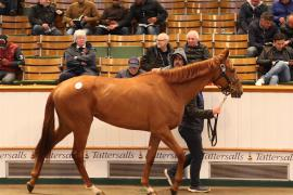 Lot  281 T G B348 Tattersalls