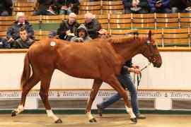 Lot  286 T G B3626 Tattersalls