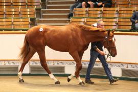 Lot  286 T G B3634 Tattersalls