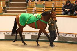 Lot  293 T G B3711 Tattersalls