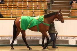 Lot  293 T G B376 Tattersalls