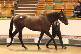 Lot  302 T G B423 Tattersalls