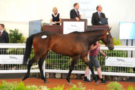 Desirable Court (IRE)