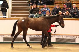 Lot  300 T G B3918 Tattersalls