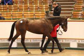 Lot  300 T G B3924 Tattersalls