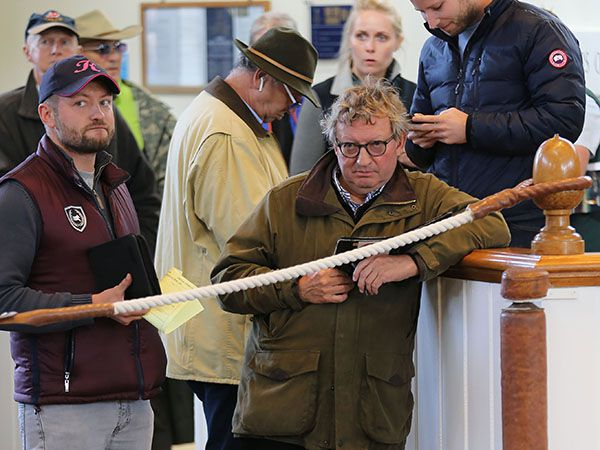 Trainer Mark Johnston has two lots catalogued as Wildcards